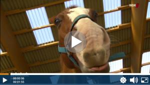 WDR_Das tollste Tier Pferd mit Hundeseele